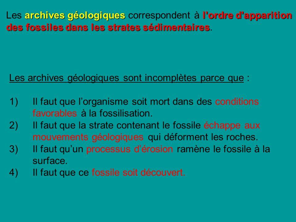 archives géologiquesl ordre d apparition des fossiles dans les strates sédimentaires Les archives géologiques correspondent à l ordre d apparition des fossiles dans les strates sédimentaires.