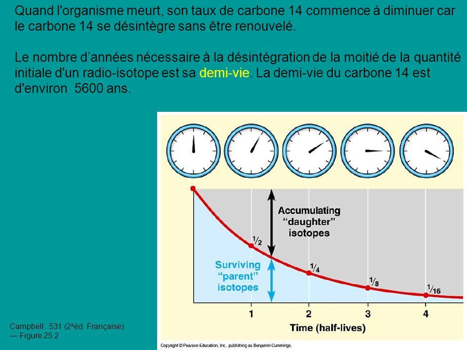 Quand l organisme meurt, son taux de carbone 14 commence à diminuer car le carbone 14 se désintègre sans être renouvelé.