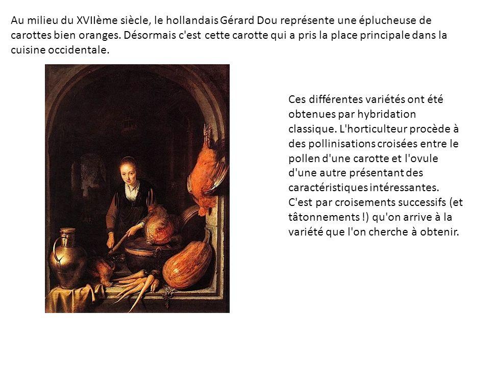 Au milieu du XVIIème siècle, le hollandais Gérard Dou représente une éplucheuse de carottes bien oranges. Désormais c'est cette carotte qui a pris la