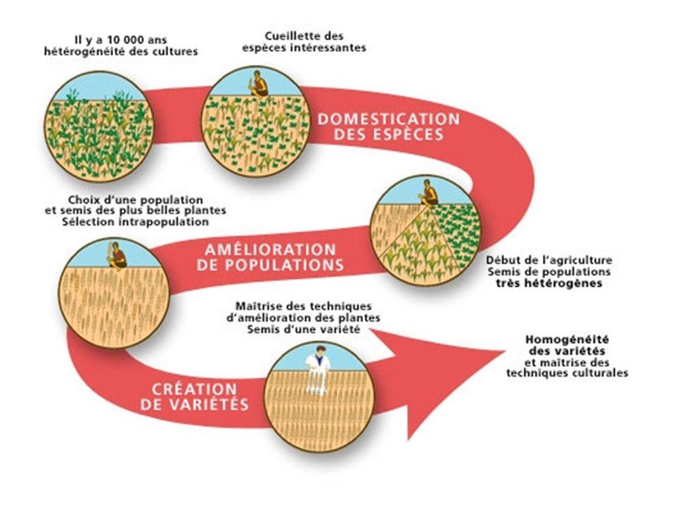 La biodiversité et les espèces cultivées Il est aisé de cloner certaines espèces végétales : marcottage, bouturage… ne font qu exploiter des possibilités de régénération existant dans le végétal.