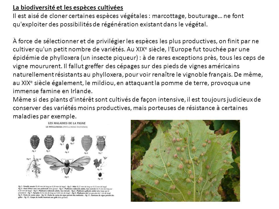 La biodiversité et les espèces cultivées Il est aisé de cloner certaines espèces végétales : marcottage, bouturage… ne font qu'exploiter des possibili
