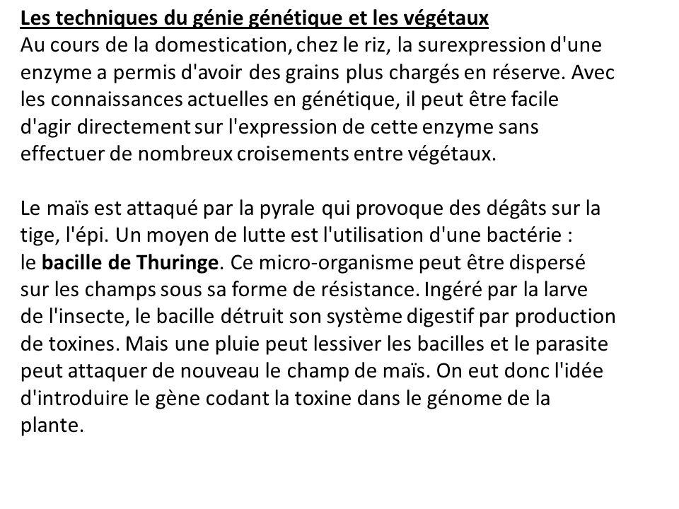 Les végétaux peuvent être attaqués par une autre bactérie, Agrobacterium tumefasciens.
