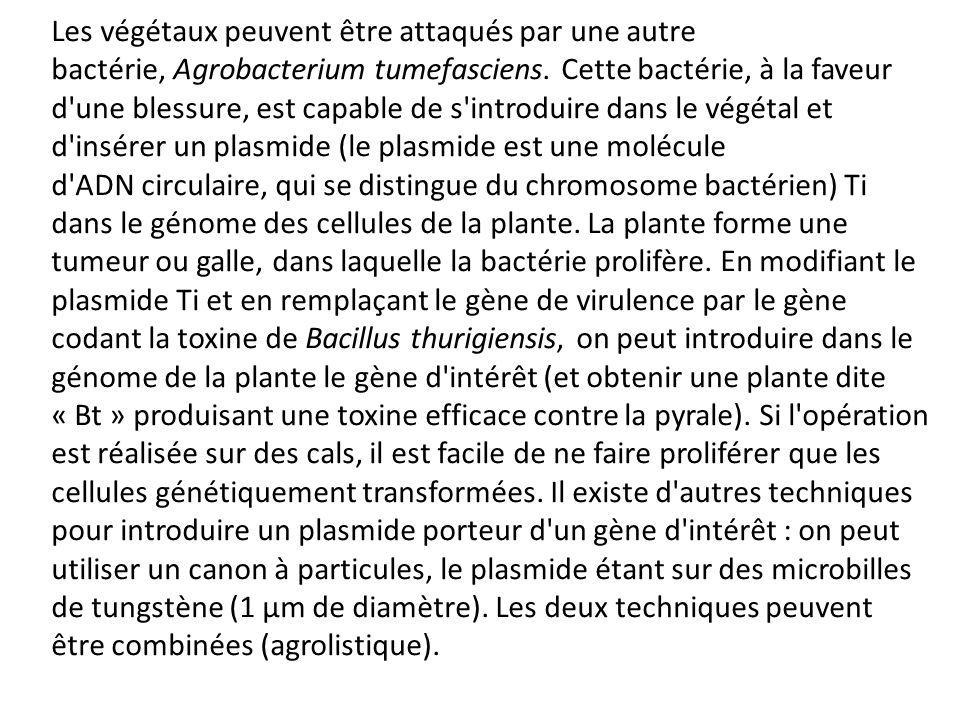 Les végétaux peuvent être attaqués par une autre bactérie, Agrobacterium tumefasciens. Cette bactérie, à la faveur d'une blessure, est capable de s'in