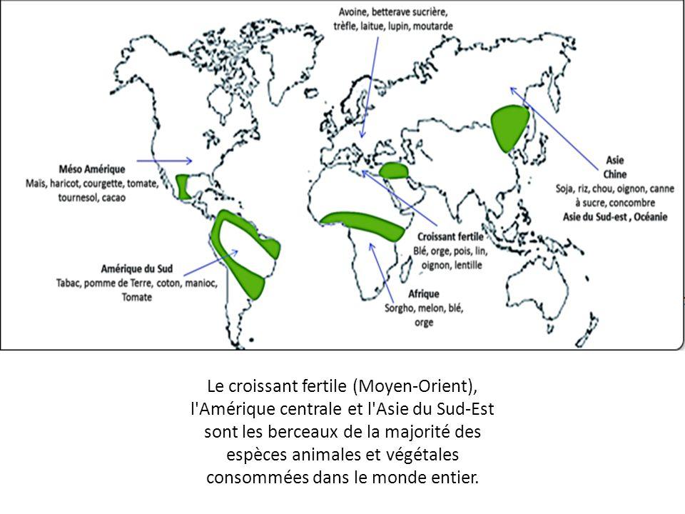 Le croissant fertile (Moyen-Orient), l'Amérique centrale et l'Asie du Sud-Est sont les berceaux de la majorité des espèces animales et végétales conso