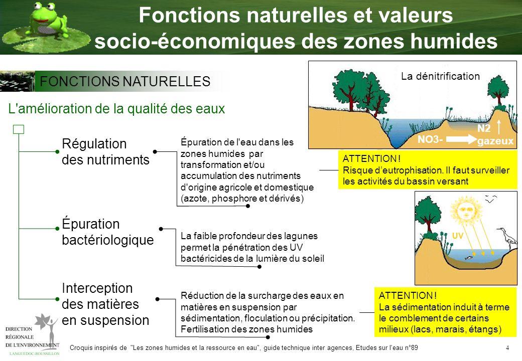 4 Fonctions naturelles et valeurs socio-économiques des zones humides L'amélioration de la qualité des eaux Interception des matières en suspension Ré