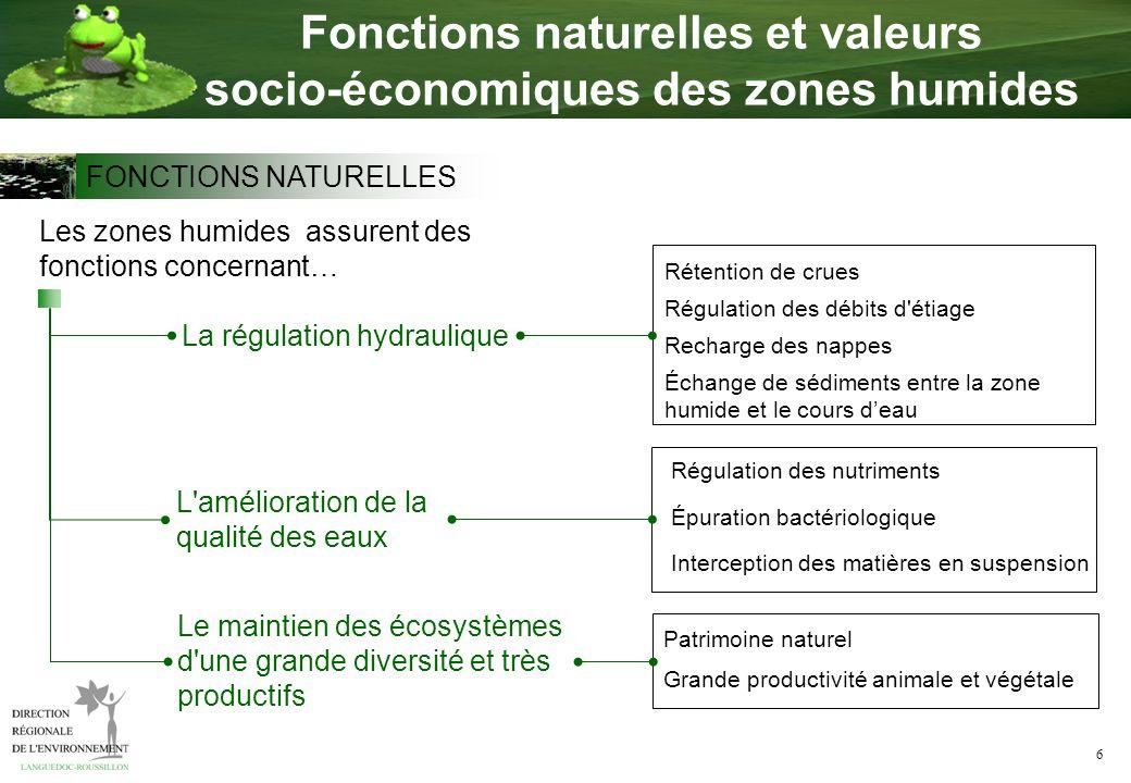 6 Fonctions naturelles et valeurs socio-économiques des zones humides La régulation hydraulique Les zones humides assurent des fonctions concernant… L