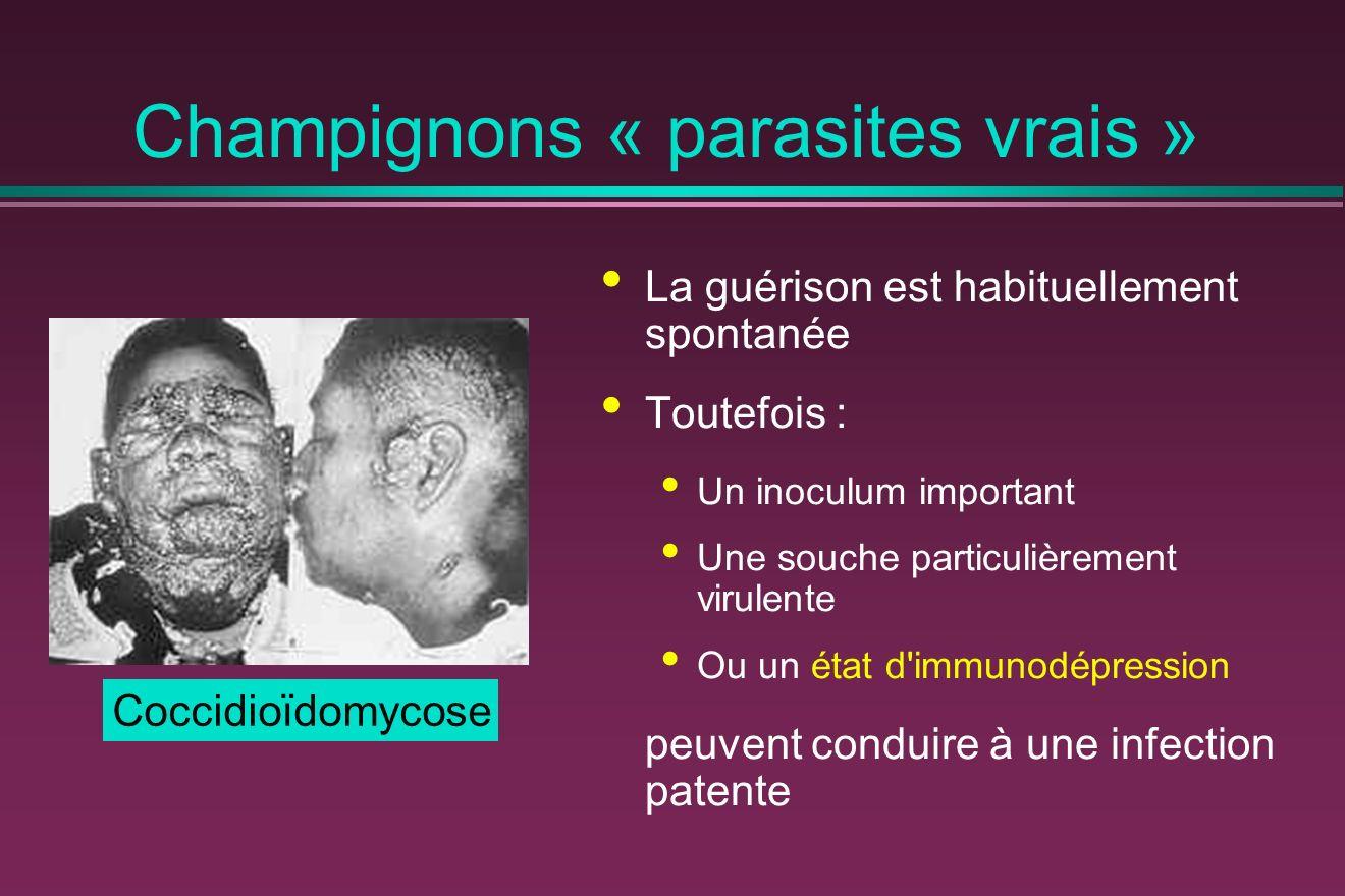 Champignons « parasites vrais » La guérison est habituellement spontanée Toutefois : Un inoculum important Une souche particulièrement virulente Ou un état d immunodépression peuvent conduire à une infection patente Coccidioïdomycose