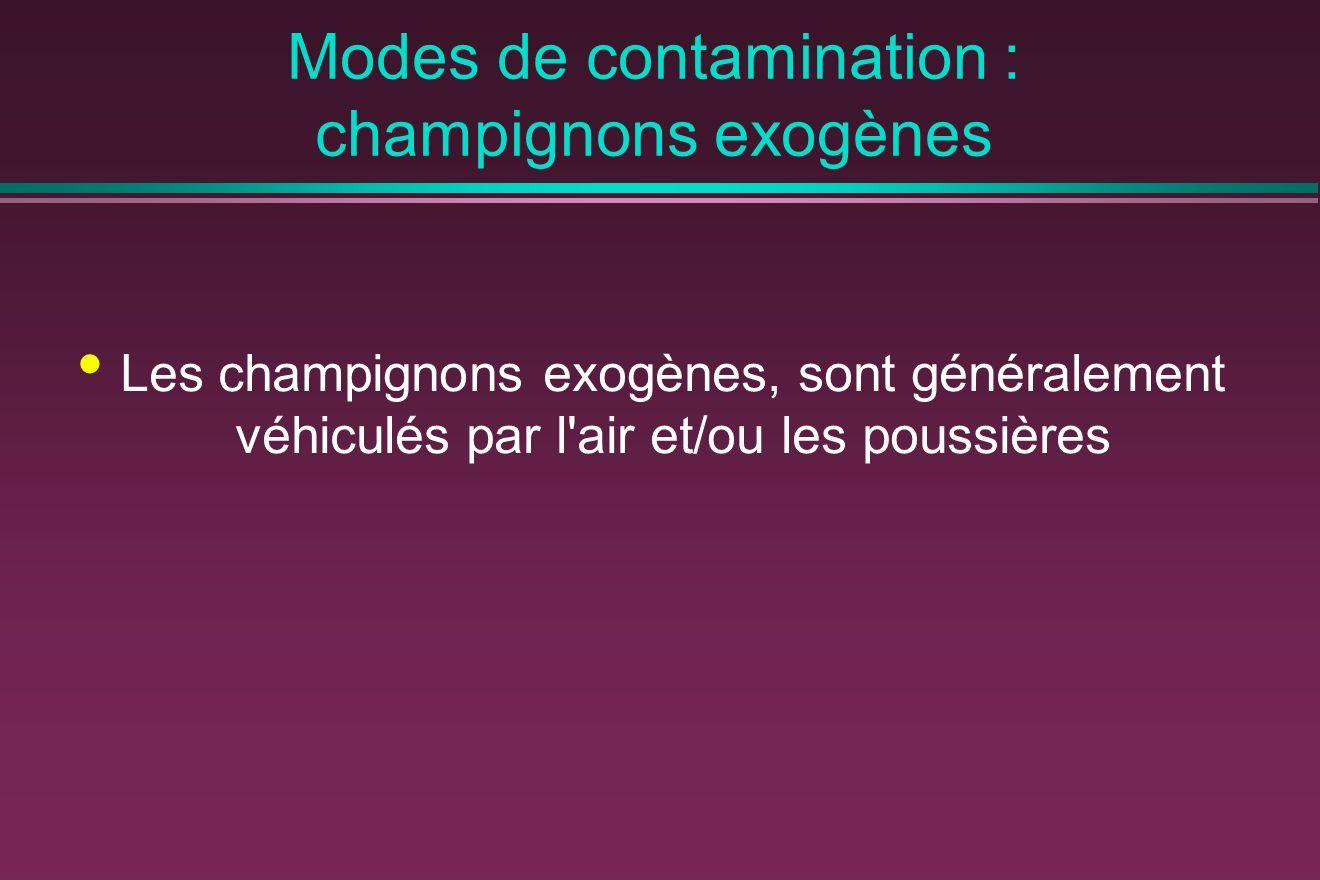 Modes de contamination : champignons exogènes Les champignons exogènes, sont généralement véhiculés par l air et/ou les poussières