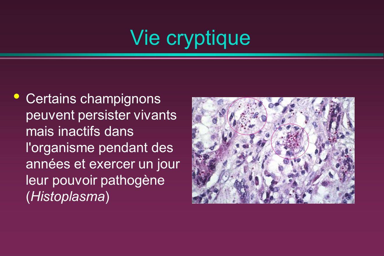 Vie cryptique Certains champignons peuvent persister vivants mais inactifs dans l organisme pendant des années et exercer un jour leur pouvoir pathogène (Histoplasma)