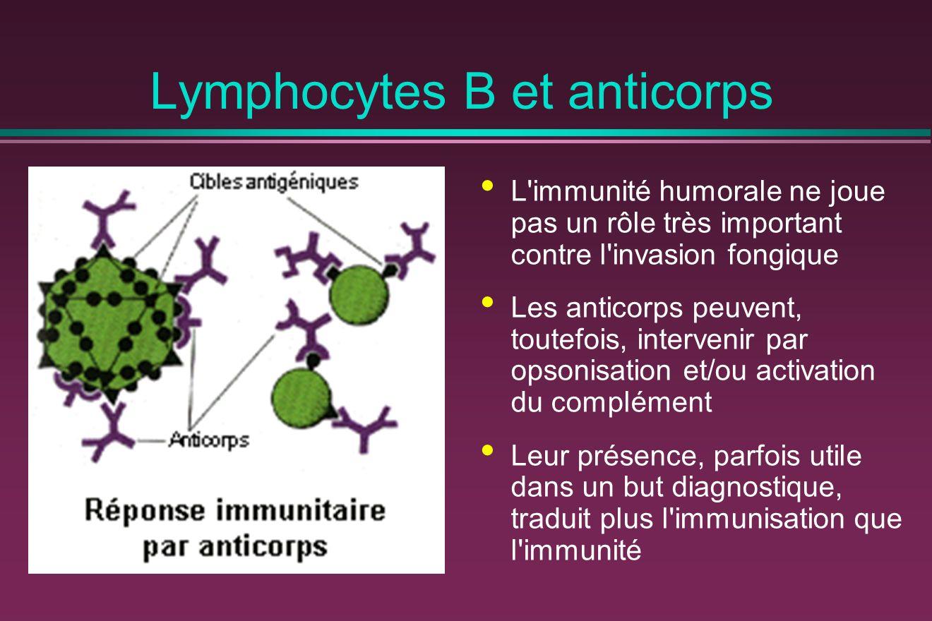 Lymphocytes B et anticorps L immunité humorale ne joue pas un rôle très important contre l invasion fongique Les anticorps peuvent, toutefois, intervenir par opsonisation et/ou activation du complément Leur présence, parfois utile dans un but diagnostique, traduit plus l immunisation que l immunité