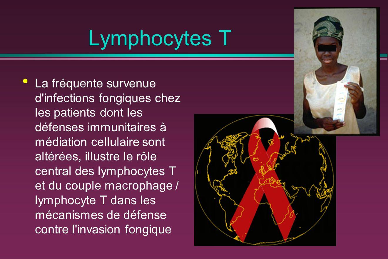 Lymphocytes T La fréquente survenue d infections fongiques chez les patients dont les défenses immunitaires à médiation cellulaire sont altérées, illustre le rôle central des lymphocytes T et du couple macrophage / lymphocyte T dans les mécanismes de défense contre l invasion fongique