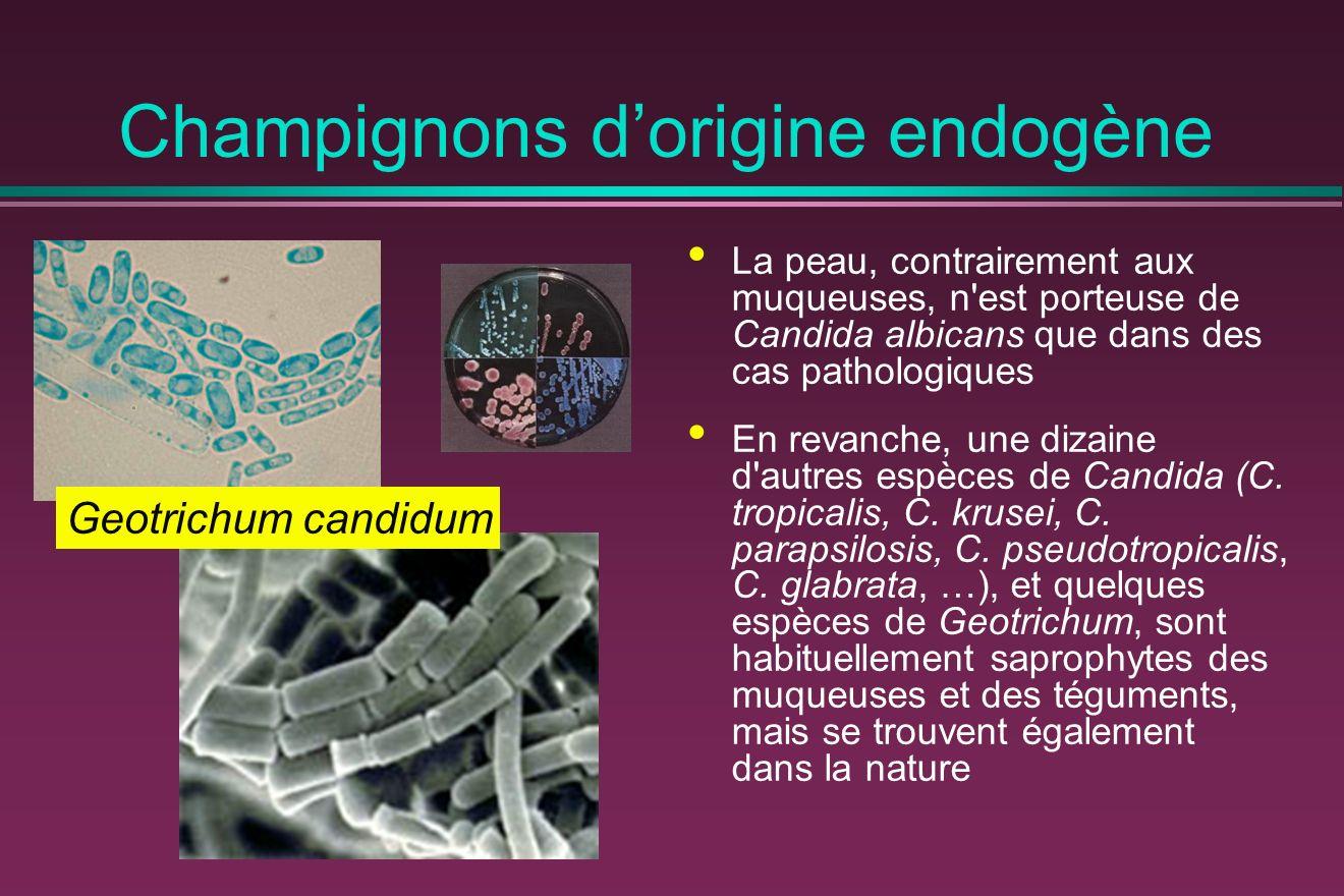 Champignons dorigine endogène La peau, contrairement aux muqueuses, n est porteuse de Candida albicans que dans des cas pathologiques En revanche, une dizaine d autres espèces de Candida (C.