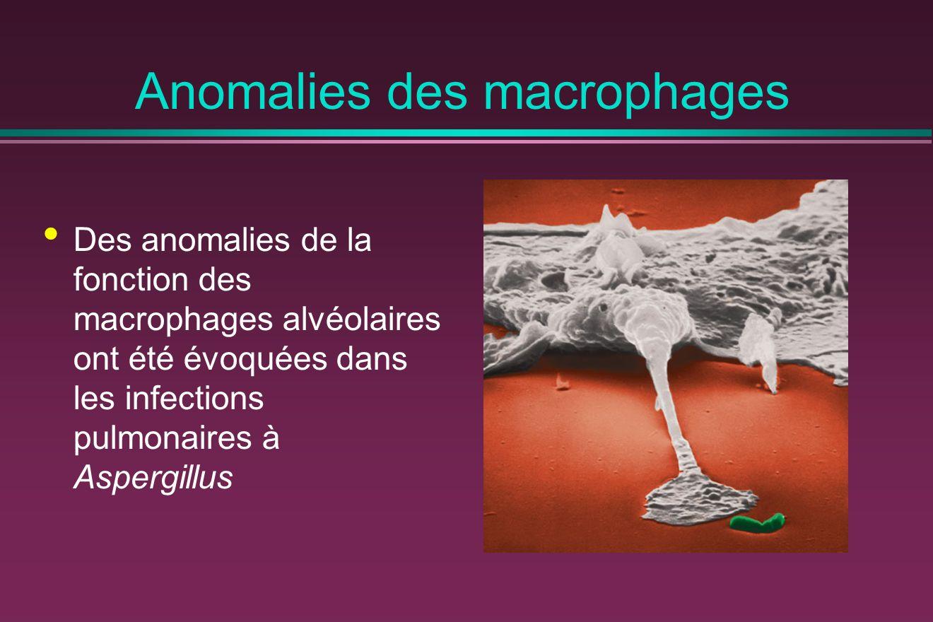 Anomalies des macrophages Des anomalies de la fonction des macrophages alvéolaires ont été évoquées dans les infections pulmonaires à Aspergillus