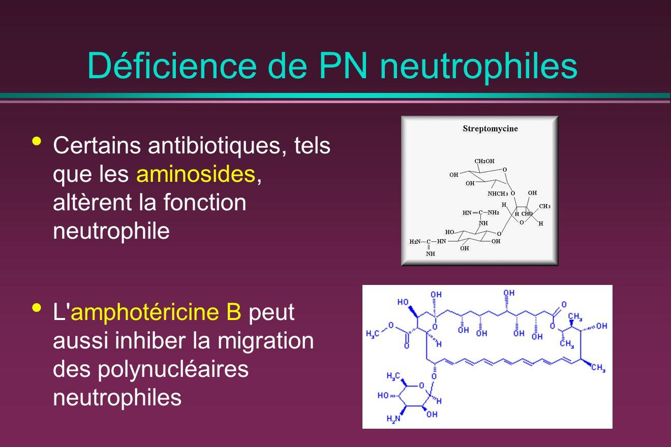 Déficience de PN neutrophiles Certains antibiotiques, tels que les aminosides, altèrent la fonction neutrophile L amphotéricine B peut aussi inhiber la migration des polynucléaires neutrophiles