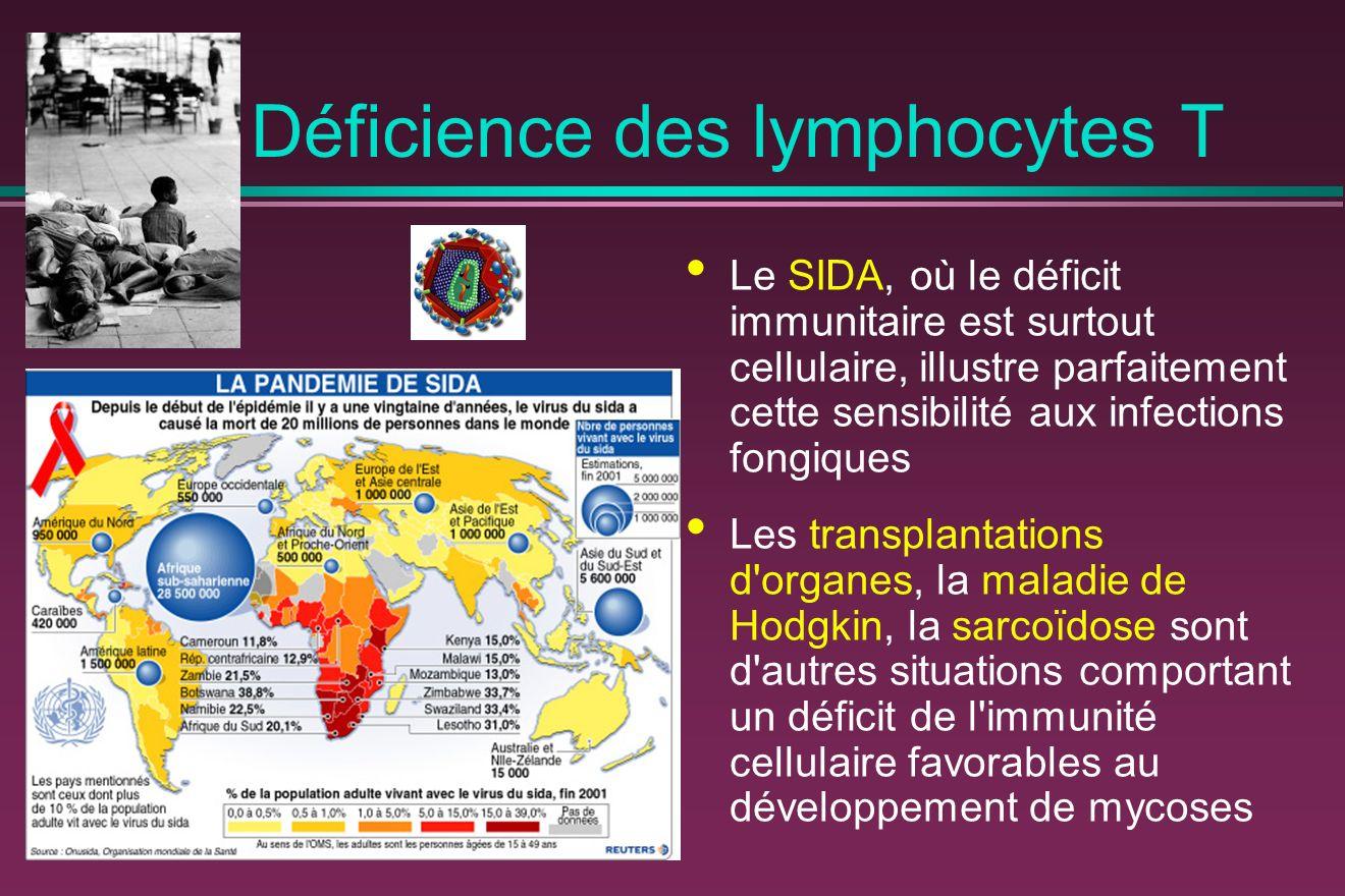 Déficience des lymphocytes T Le SIDA, où le déficit immunitaire est surtout cellulaire, illustre parfaitement cette sensibilité aux infections fongiques Les transplantations d organes, la maladie de Hodgkin, la sarcoïdose sont d autres situations comportant un déficit de l immunité cellulaire favorables au développement de mycoses