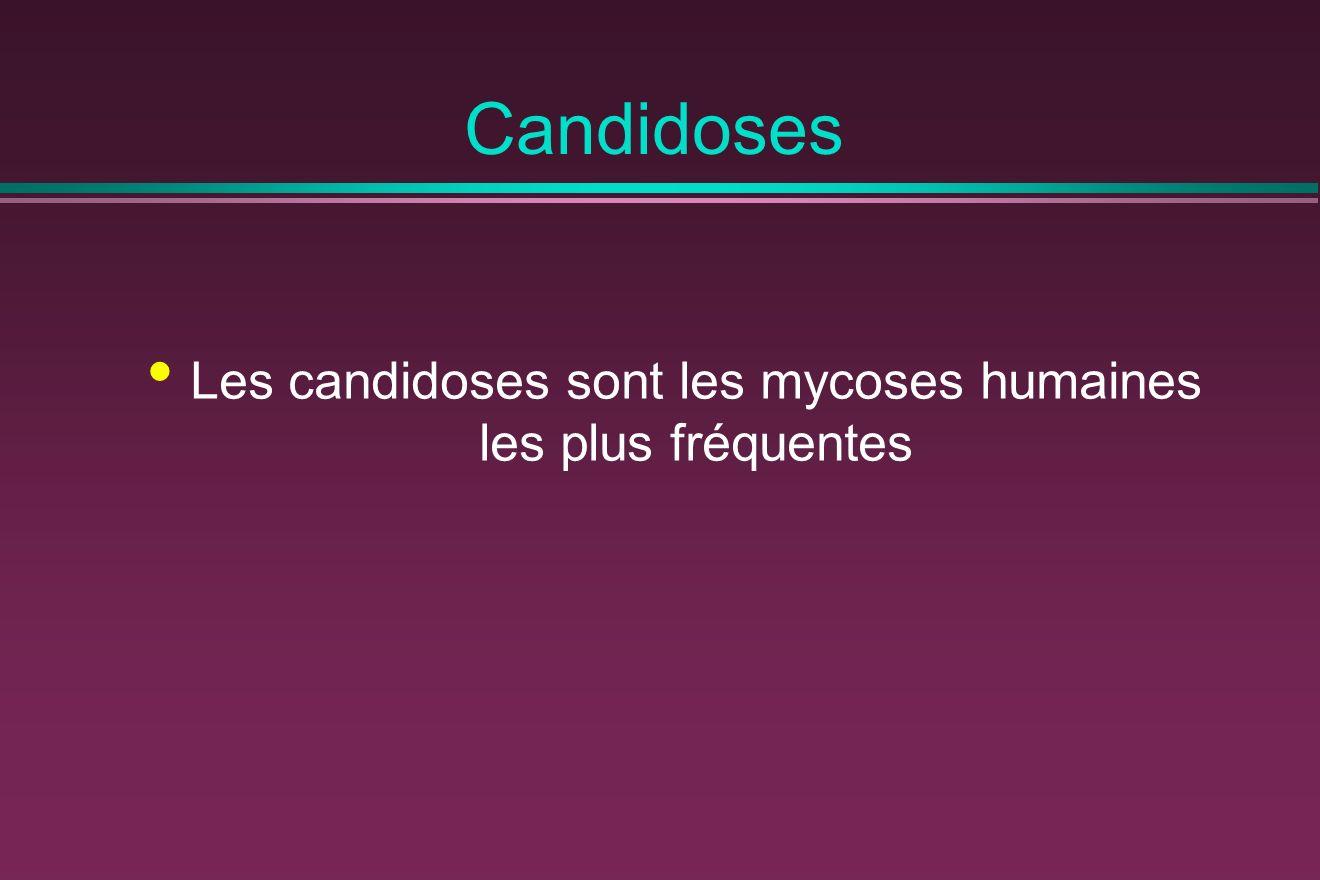 Candidoses Les candidoses sont les mycoses humaines les plus fréquentes