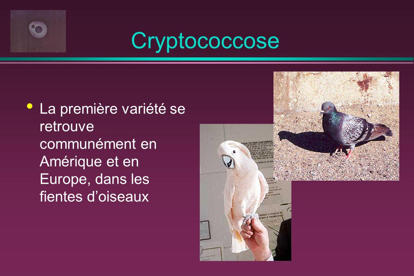 Cryptococcose La première variété se retrouve communément en Amérique et en Europe, dans les fientes doiseaux