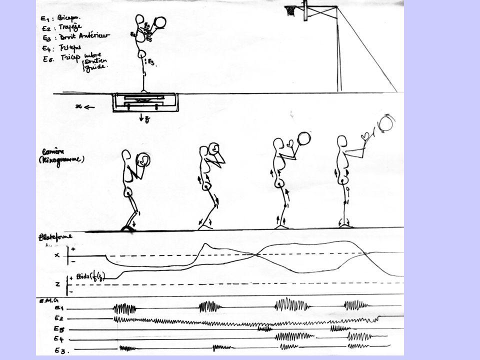 Le geste sportif et les sciences de la vie… Exemple dun lancer-franc en basket ball….