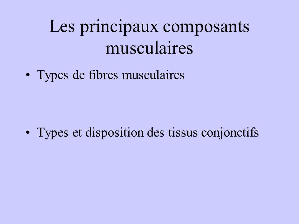 Les composantes de la morphologie Taille, et longueur des segments Masse % masse grasse % masse sèche Ratio Taille/poids Somatotype (endo, meso, ectom