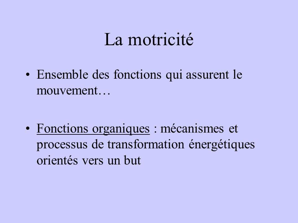 La motricité Ensemble des fonctions qui assurent le mouvement… Fonctions organiques : mécanismes et processus de transformation énergétiques orientés vers un but