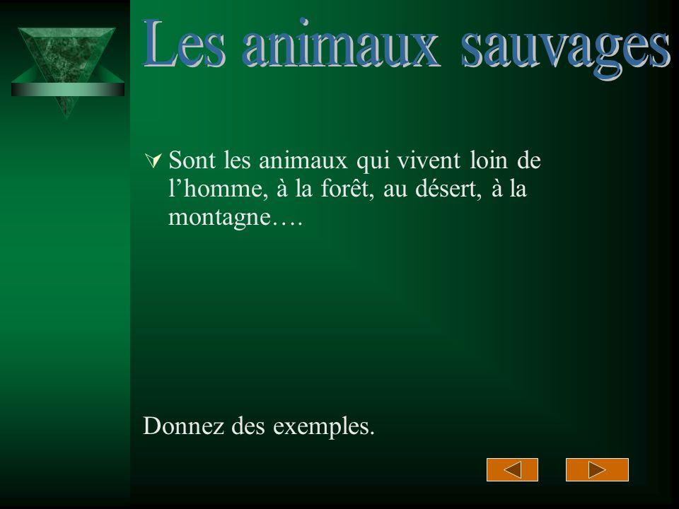Sont les animaux qui vivent loin de lhomme, à la forêt, au désert, à la montagne….