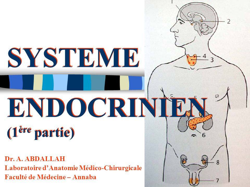 SYSTEME ENDOCRINIEN (1 ère partie) Dr.A.