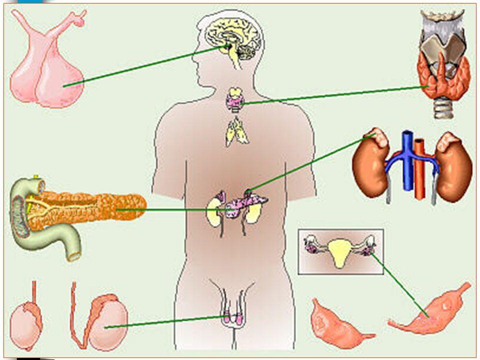 26/01/2008 Dr. ABDALLAH - Système endocrinien I 10