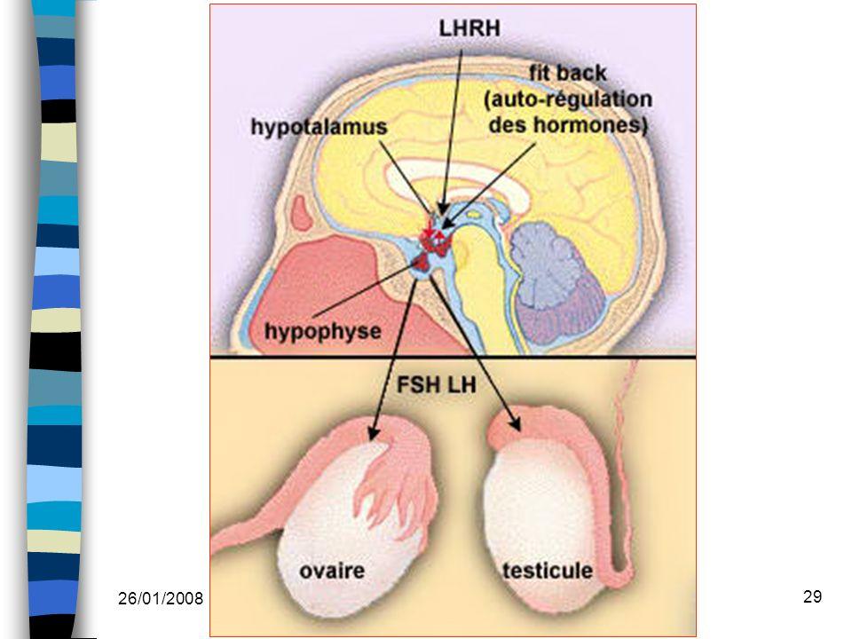 26/01/2008 Dr. ABDALLAH - Système endocrinien I 29