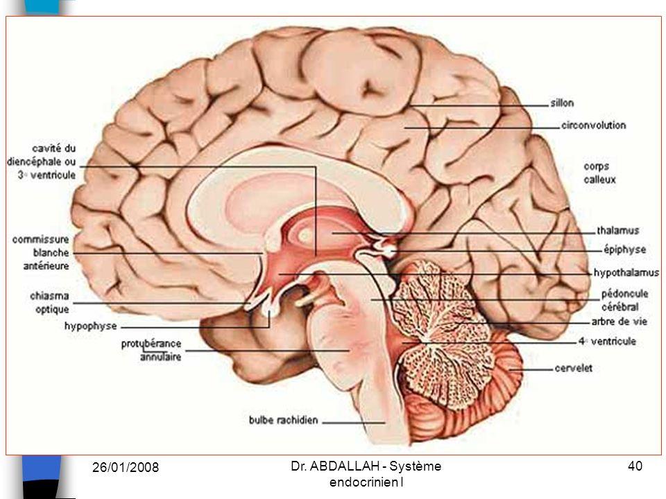 26/01/2008 Dr. ABDALLAH - Système endocrinien I 40