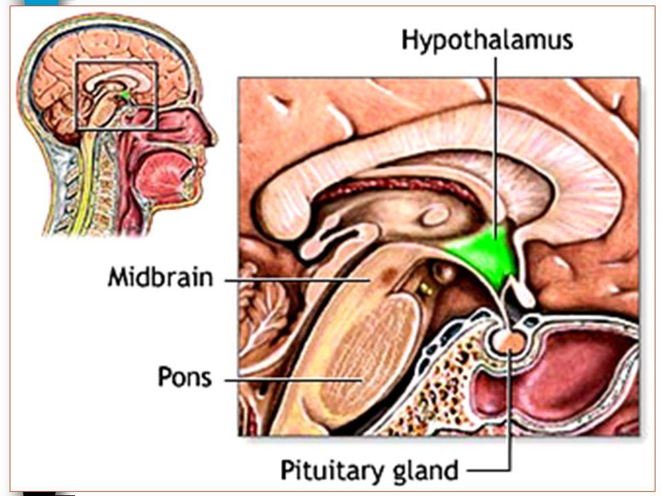 26/01/2008 Dr. ABDALLAH - Système endocrinien I 43