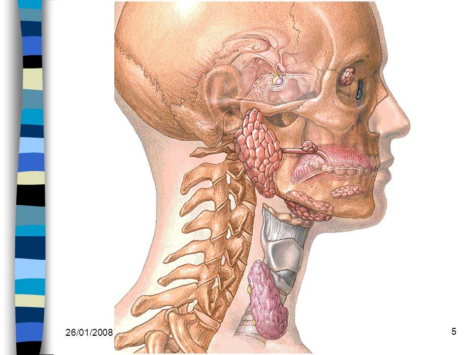 26/01/2008 Dr. ABDALLAH - Système endocrinien I 5