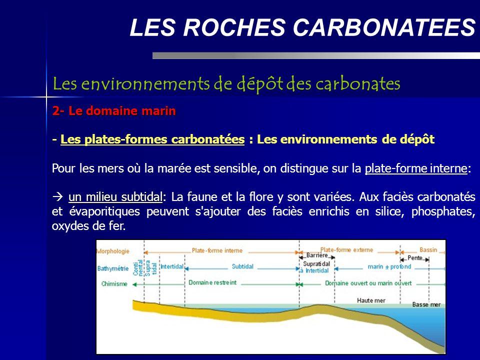 LES ROCHES CARBONATEES 2- Le domaine marin - Les plates-formes carbonatées : Les environnements de dépôt Pour les mers où la marée est sensible, on distingue sur la plate-forme interne: un milieu subtidal un milieu subtidal: La faune et la flore y sont variées.