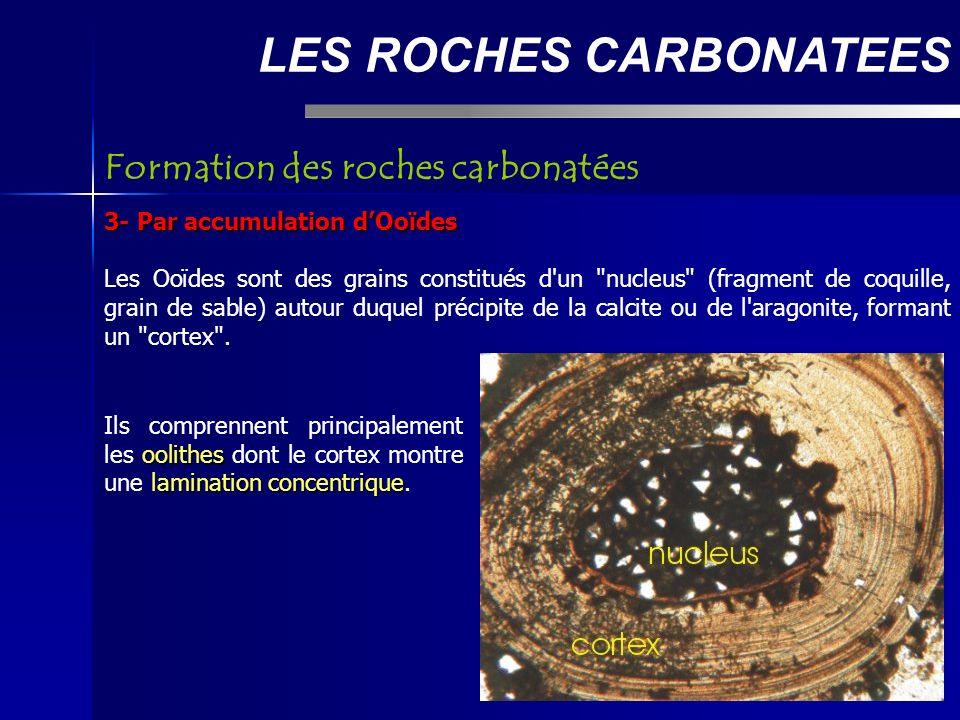 LES ROCHES CARBONATEES 3- Par accumulation dOoïdes Les Ooïdes sont des grains constitués d un nucleus (fragment de coquille, grain de sable) autour duquel précipite de la calcite ou de l aragonite, formant un cortex .