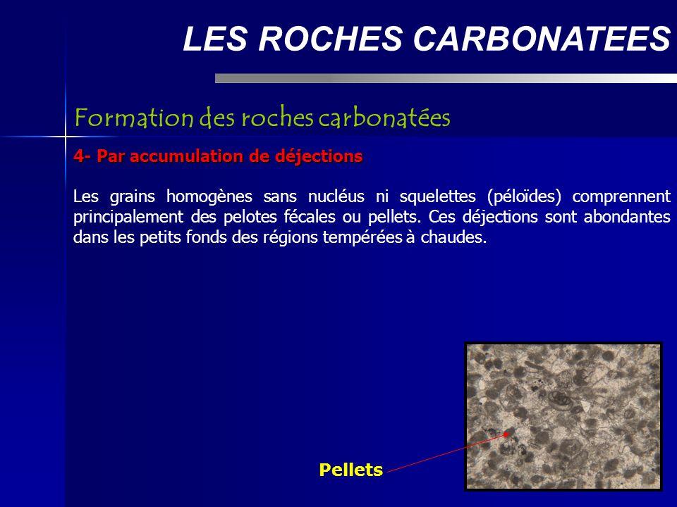 LES ROCHES CARBONATEES 4- Par accumulation de déjections Les grains homogènes sans nucléus ni squelettes (péloïdes) comprennent principalement des pelotes fécales ou pellets.