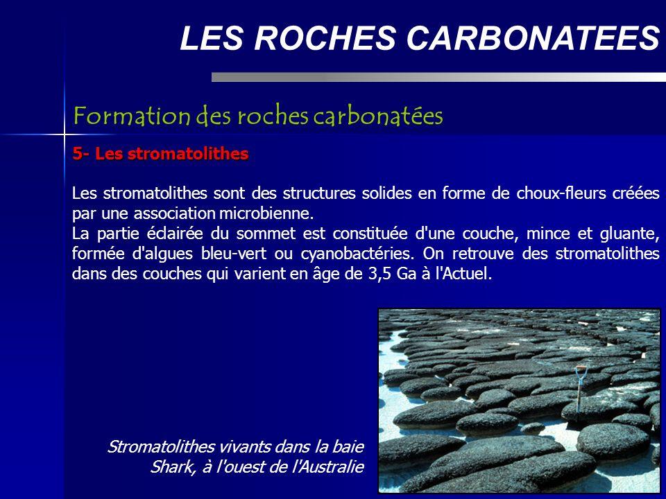 LES ROCHES CARBONATEES 5- Les stromatolithes Les stromatolithes sont des structures solides en forme de choux-fleurs créées par une association microbienne.