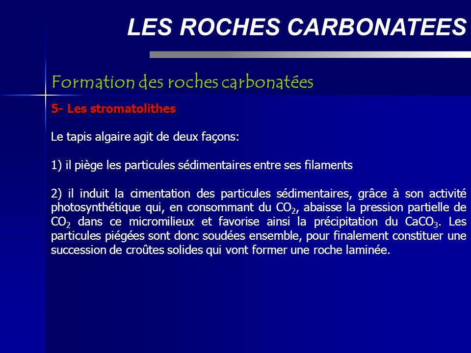 LES ROCHES CARBONATEES 5- Les stromatolithes Le tapis algaire agit de deux façons: 1) il piège les particules sédimentaires entre ses filaments 2) il induit la cimentation des particules sédimentaires, grâce à son activité photosynthétique qui, en consommant du CO 2, abaisse la pression partielle de CO 2 dans ce micromilieux et favorise ainsi la précipitation du CaCO 3.