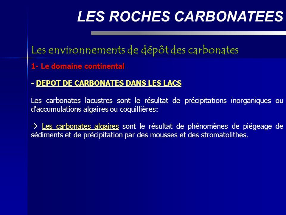 LES ROCHES CARBONATEES 1- Le domaine continental - DEPOT DE CARBONATES DANS LES LACS Les carbonates lacustres sont le résultat de précipitations inorganiques ou d accumulations algaires ou coquillières: Les carbonates algaires Les carbonates algaires sont le résultat de phénomènes de piégeage de sédiments et de précipitation par des mousses et des stromatolithes.