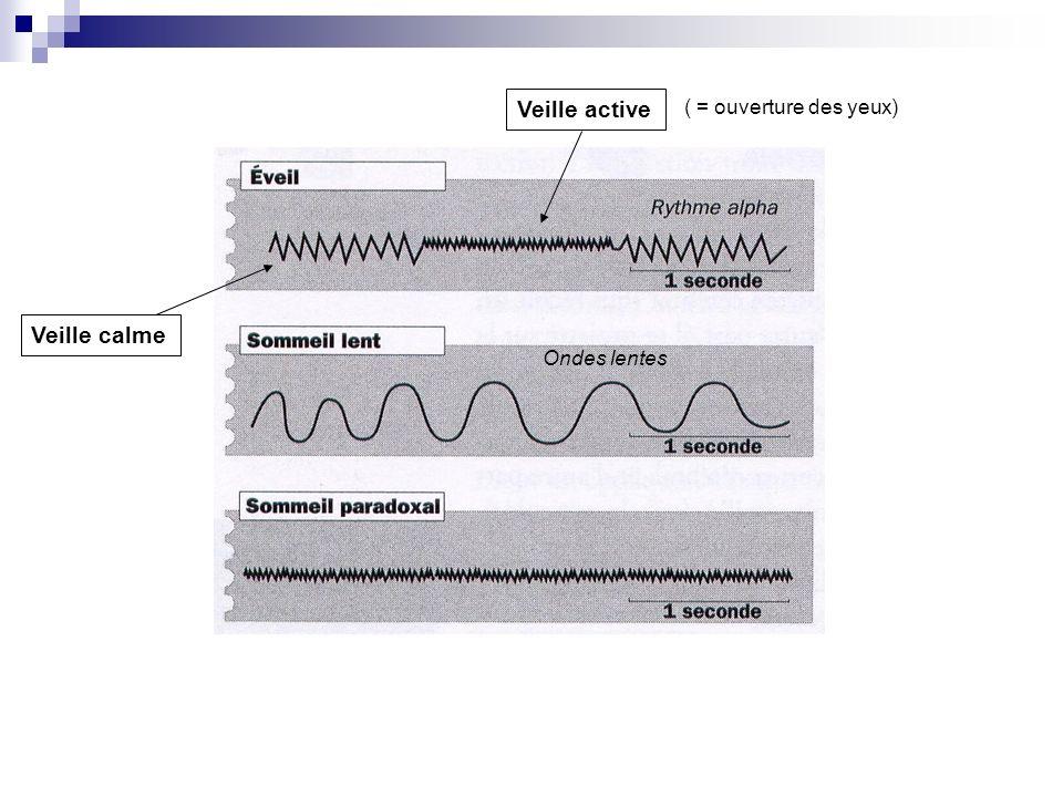 EEG = meilleur indicateur des différents états fonctionnels, Veille-SL-SP Létude de lEEG enregistré au cours du sommeil a permis de subdiviser le sommeil lent en 4 stades chez lhomme.