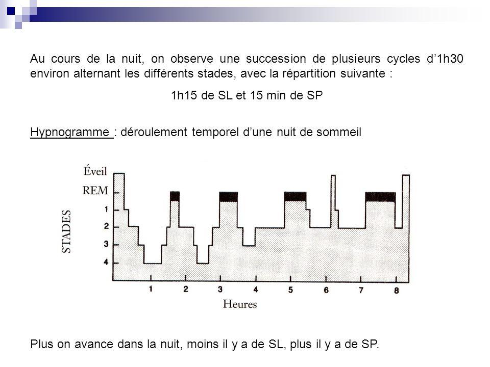 Au cours de la nuit, on observe une succession de plusieurs cycles d1h30 environ alternant les différents stades, avec la répartition suivante : 1h15