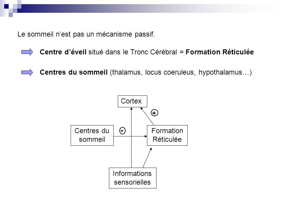 Le sommeil nest pas un mécanisme passif. Centre déveil situé dans le Tronc Cérébral = Formation Réticulée Centres du sommeil (thalamus, locus coeruleu