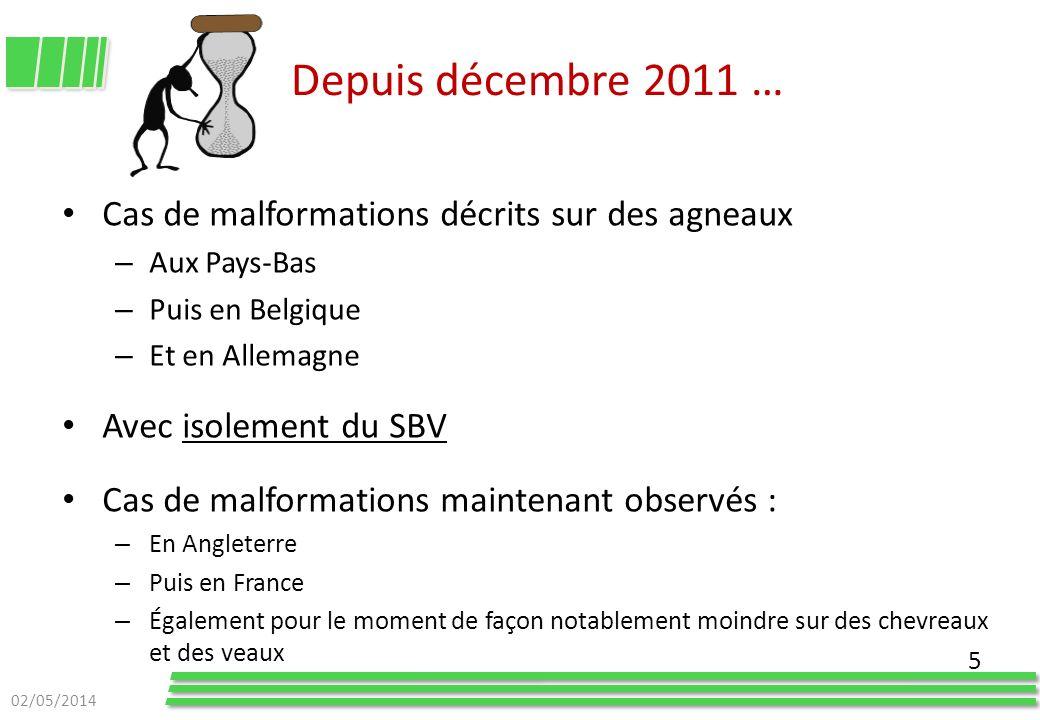Depuis décembre 2011 … Cas de malformations décrits sur des agneaux – Aux Pays-Bas – Puis en Belgique – Et en Allemagne Avec isolement du SBV Cas de m