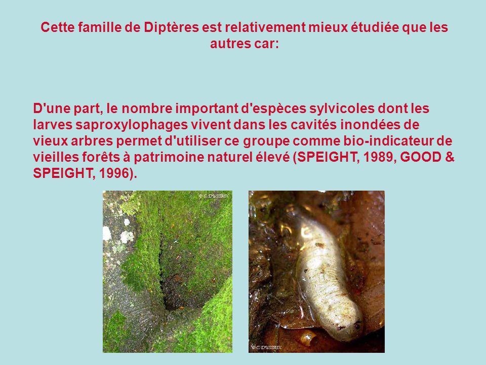 Cette famille de Diptères est relativement mieux étudiée que les autres car: D'une part, le nombre important d'espèces sylvicoles dont les larves sapr