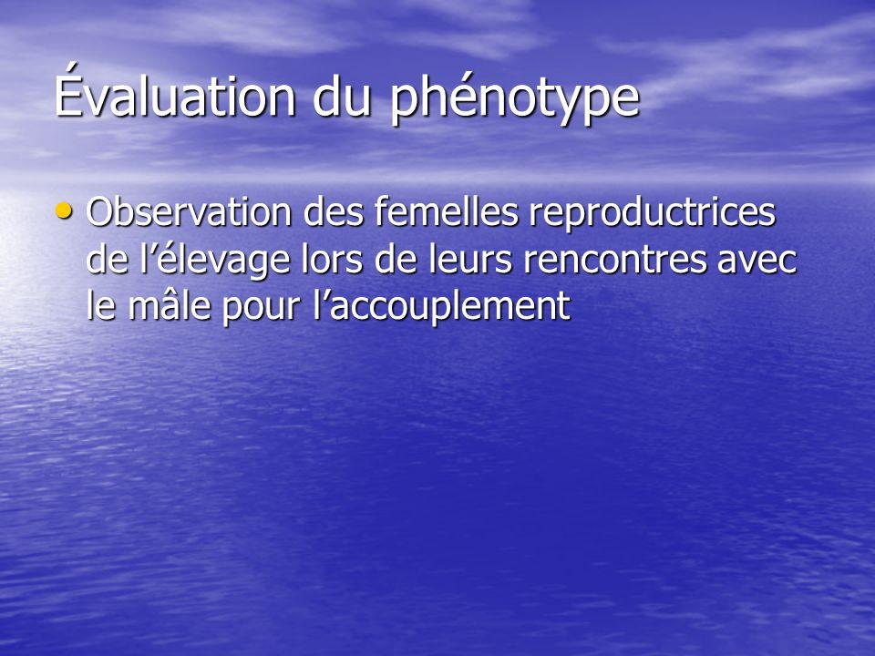 Évaluation du phénotype Observation des femelles reproductrices de lélevage lors de leurs rencontres avec le mâle pour laccouplement Observation des f