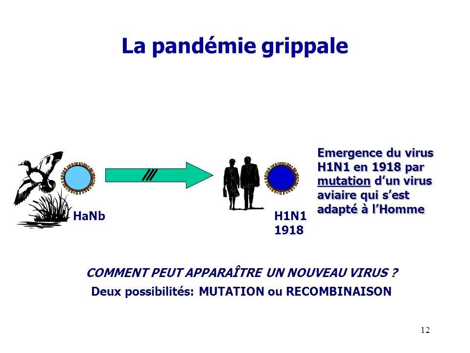 13 Pandémie à A/H1N1 Premier cas vers le 15 février 2009 au village de la Gloria-Véracruz (Mexique ) Passage en pandémie (niveau 6 de OMS ) : le 11 juin 2009 Sujets jeunes : âge médian 20 ans (seulement 5 % des malades ont plus de 50 ans ) Diffusion mondiale rapide favorisée par le transport aérien