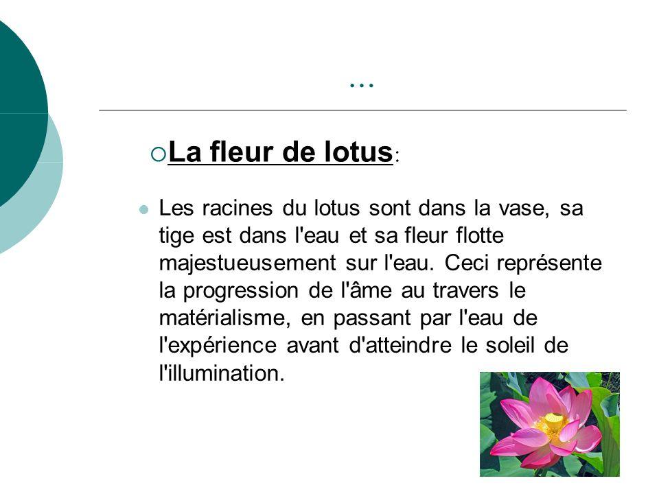 … Les racines du lotus sont dans la vase, sa tige est dans l'eau et sa fleur flotte majestueusement sur l'eau. Ceci représente la progression de l'âme