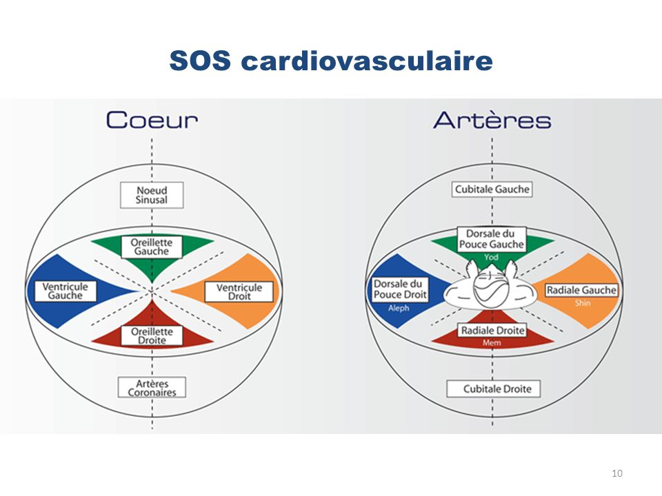 SOS cardiovasculaire 10