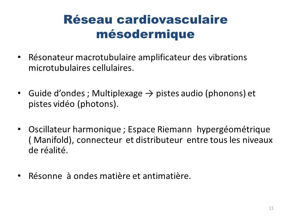 Réseau cardiovasculaire mésodermique Résonateur macrotubulaire amplificateur des vibrations microtubulaires cellulaires. Guide dondes ; Multiplexage p