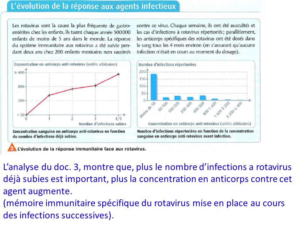 Lanalyse du doc. 3, montre que, plus le nombre dinfections a rotavirus déjà subies est important, plus la concentration en anticorps contre cet agent