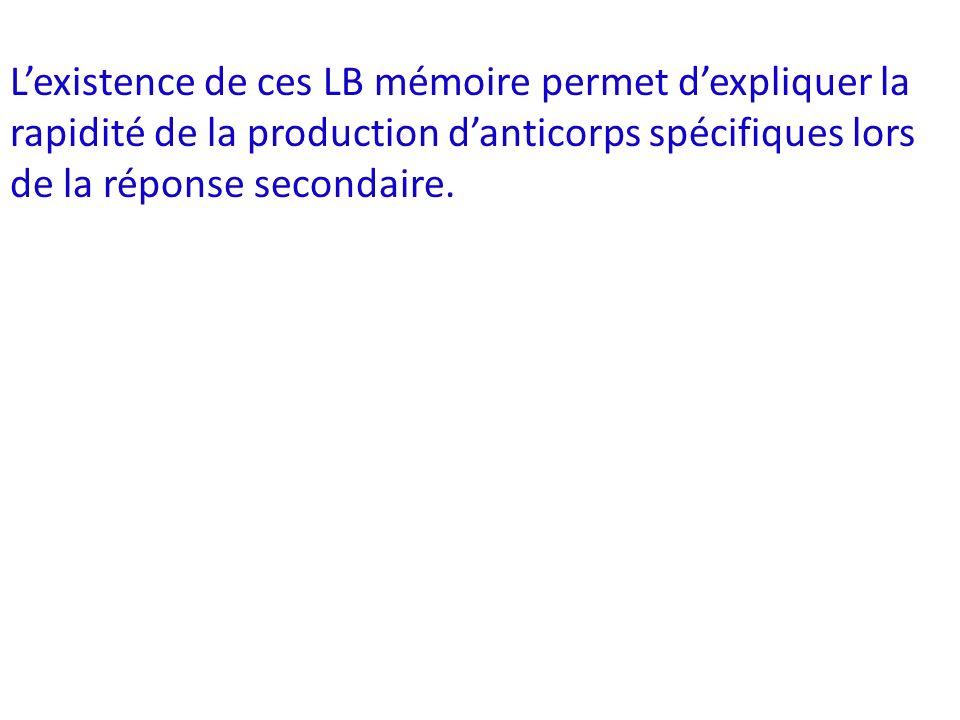 Lexistence de ces LB mémoire permet dexpliquer la rapidité de la production danticorps spécifiques lors de la réponse secondaire.