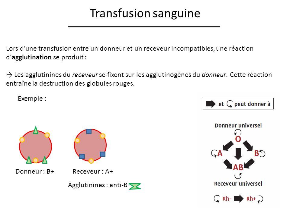 Transfusion sanguine Lors dune transfusion entre un donneur et un receveur incompatibles, une réaction dagglutination se produit : Les agglutinines du receveur se fixent sur les agglutinogènes du donneur.